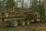 Tractor-trailer loaded with logs cut on my lot.